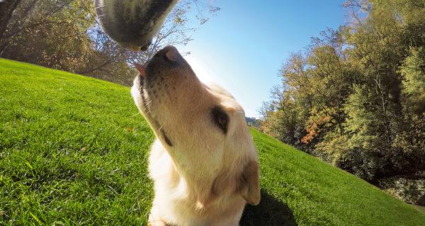 GP FETCH DOG HARNESS_4