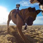 GP FETCH DOG HARNESS_5