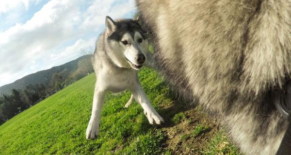 GP FETCH DOG HARNESS_6