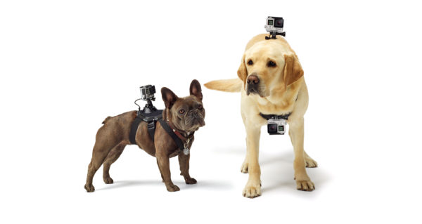 GP FETCH DOG HARNESS_1