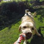 GP FETCH DOG HARNESS_3
